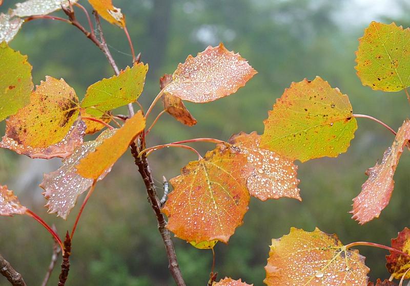 glitzer auch auf den Blättern