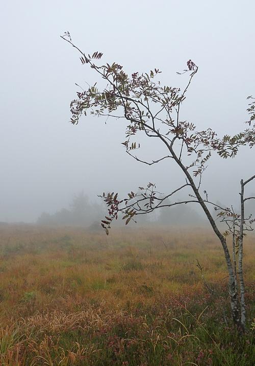hübsches kleines bäumchen im nebel
