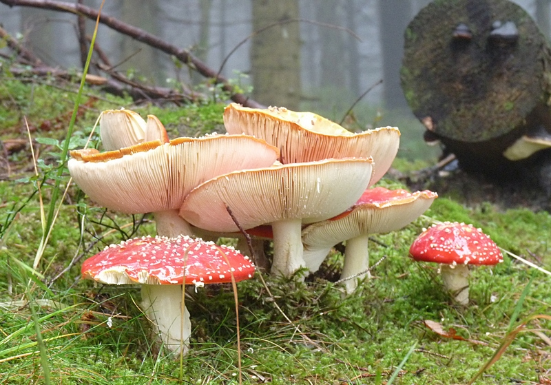 jetzt findet man auch die schönsten pilze