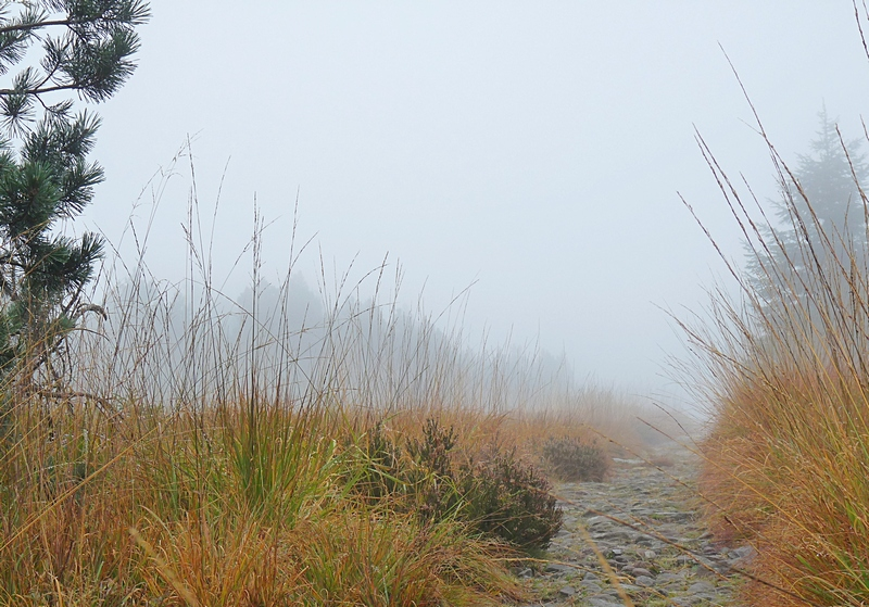 wanderpfad im nebel schliffkopf