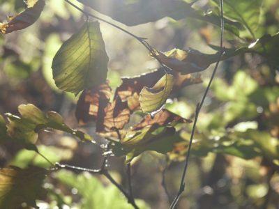 4_Herbstblätter Ittersbacher Wald_1