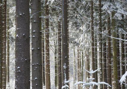 Schwarzwald im Winter_1