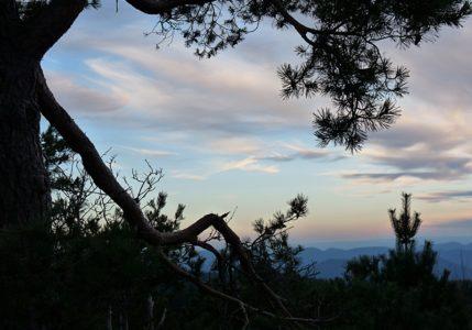 auf dem Schliffkopf im Schwarzwald