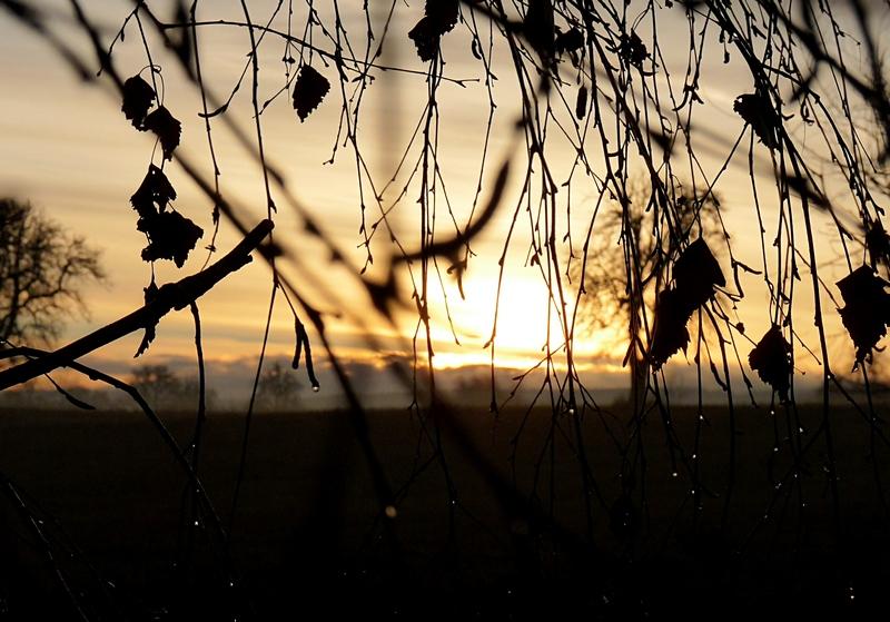 6_Tautropfen in der Morgensonne