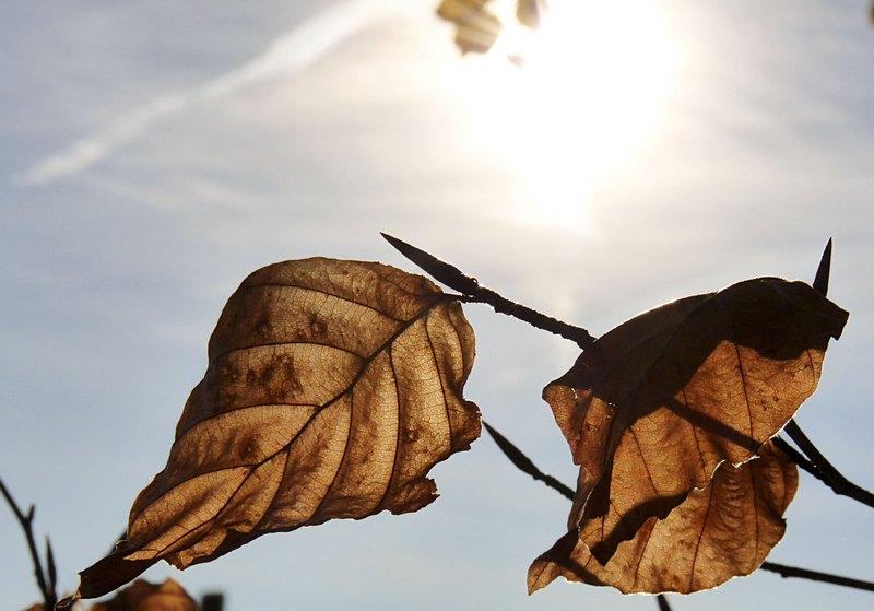 Blätter vor blauem Himmel
