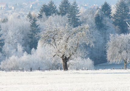 Baum auf gefrorener Wiese