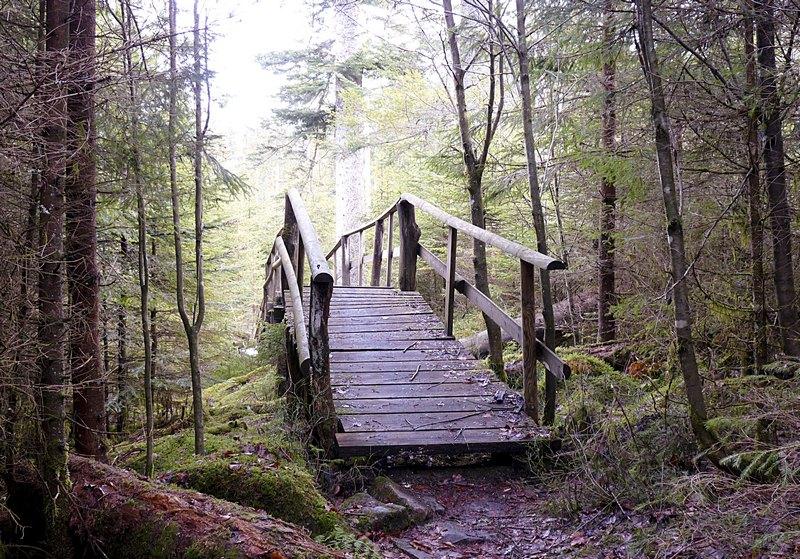Holzbrücke Bärlochkar schwarzwald