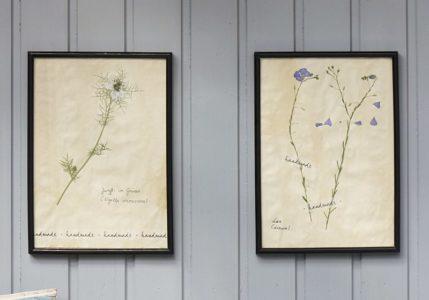 Herbarium an der Wand