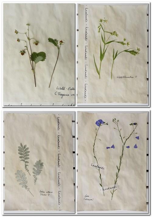 Herbarium machen