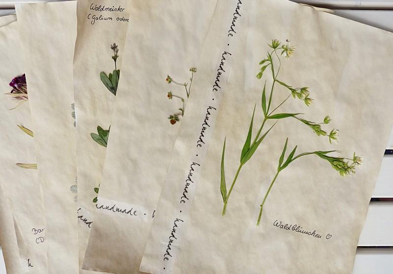 Herbarium selber machen mit gepressten Blüten