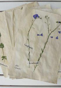 gepresste Blumen verwenden