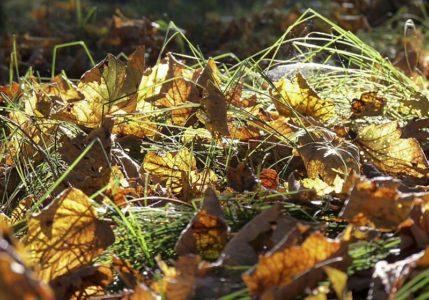 buntes raschelndes Herbstlaub